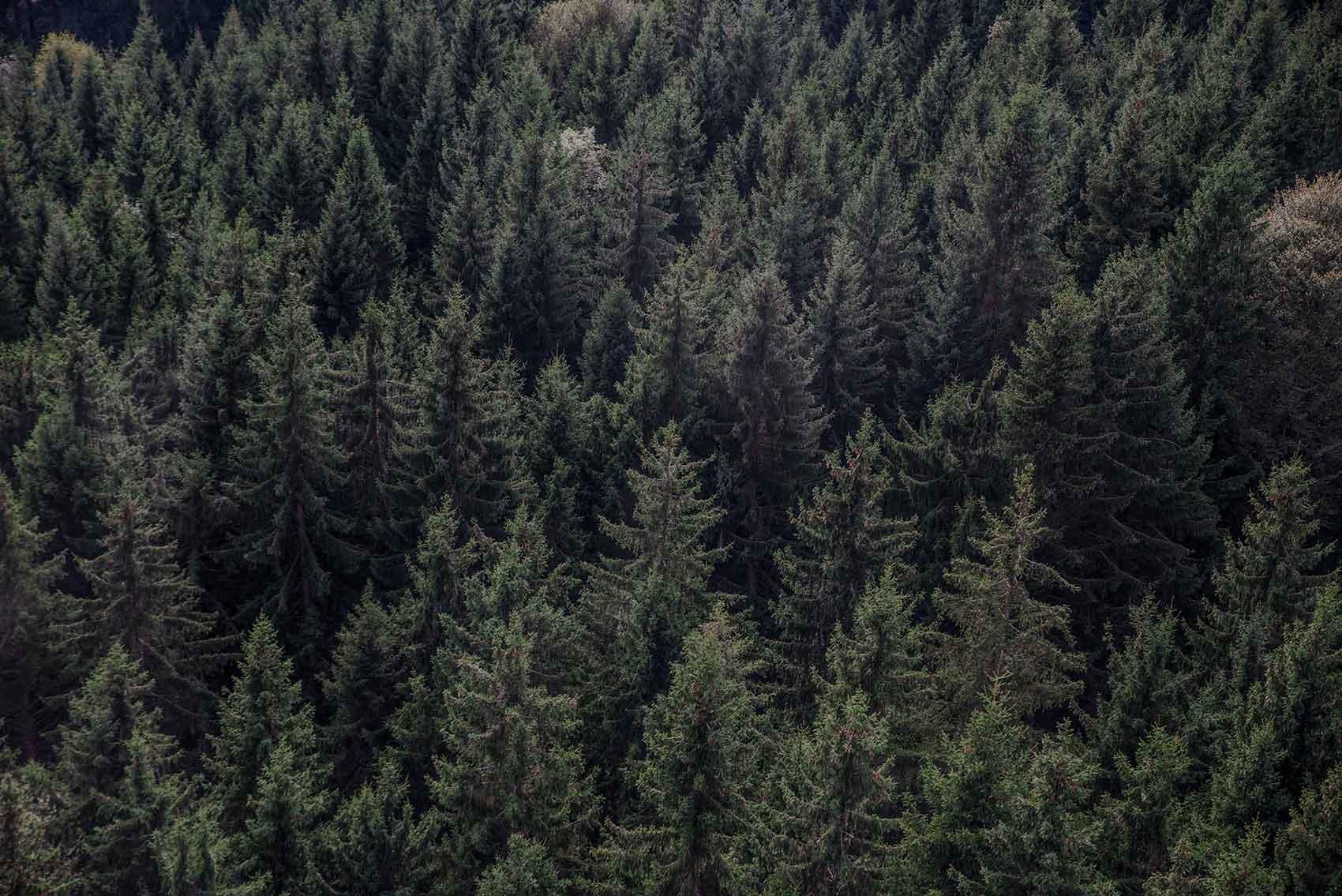 Lämpökäsittelypalvelu Thermopolar puutavaran jalostajille, sahoille ja puun maahantuojille.
