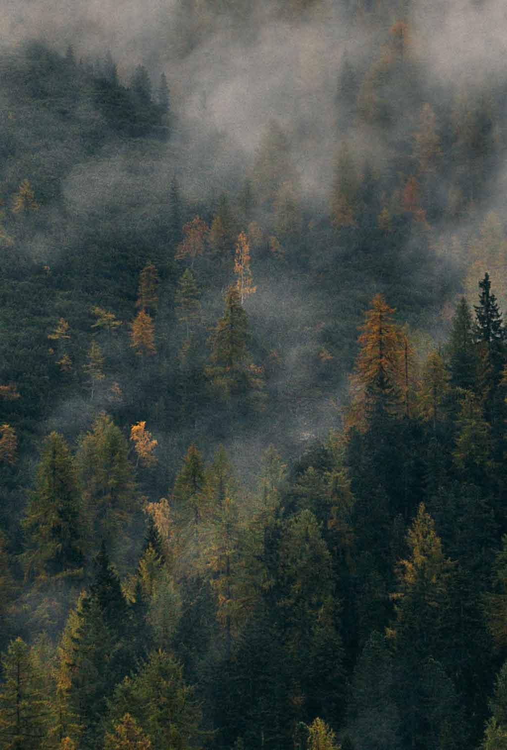 Lämpökäsittely on ekologinen, myrkytön käsittely puulle.