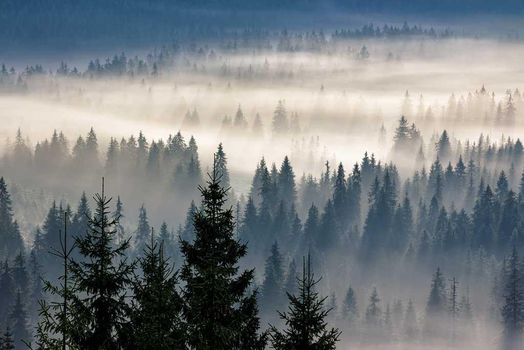 Puu on puhdas, turvallinen materiaali.
