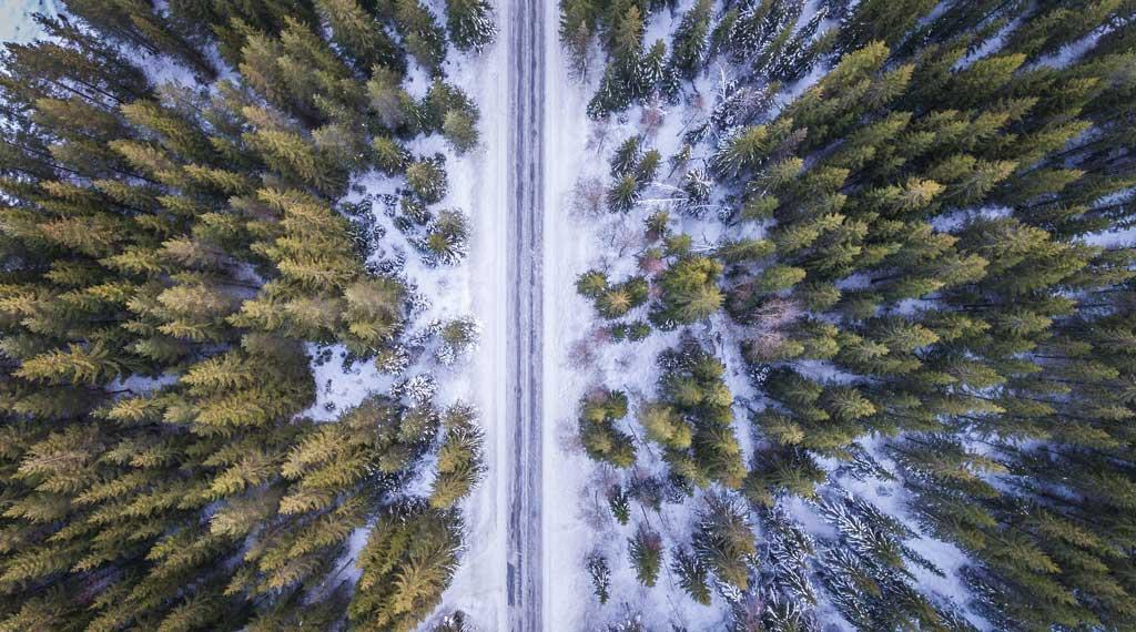Talvinen metsä.